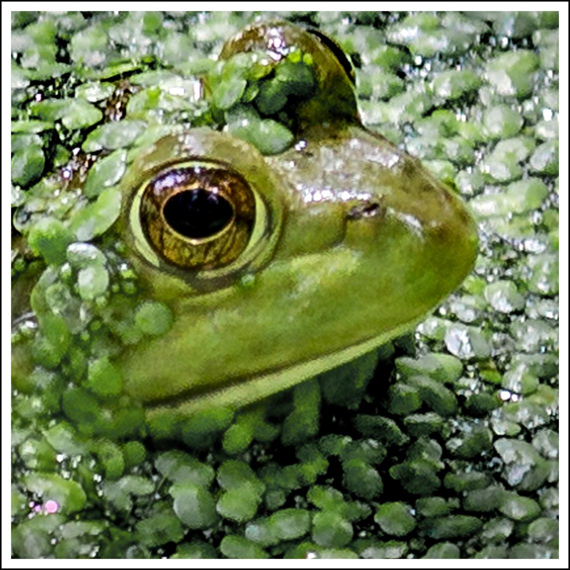 Frog 4x6 (2) - Copy