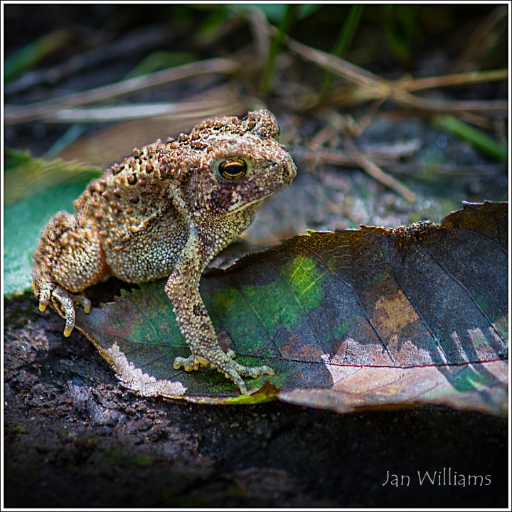 frog4comp_jpg