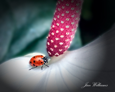 lady bug - the climb