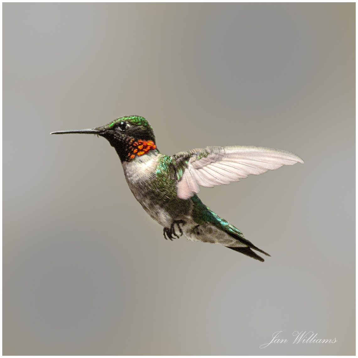 WP-Hummingbird2