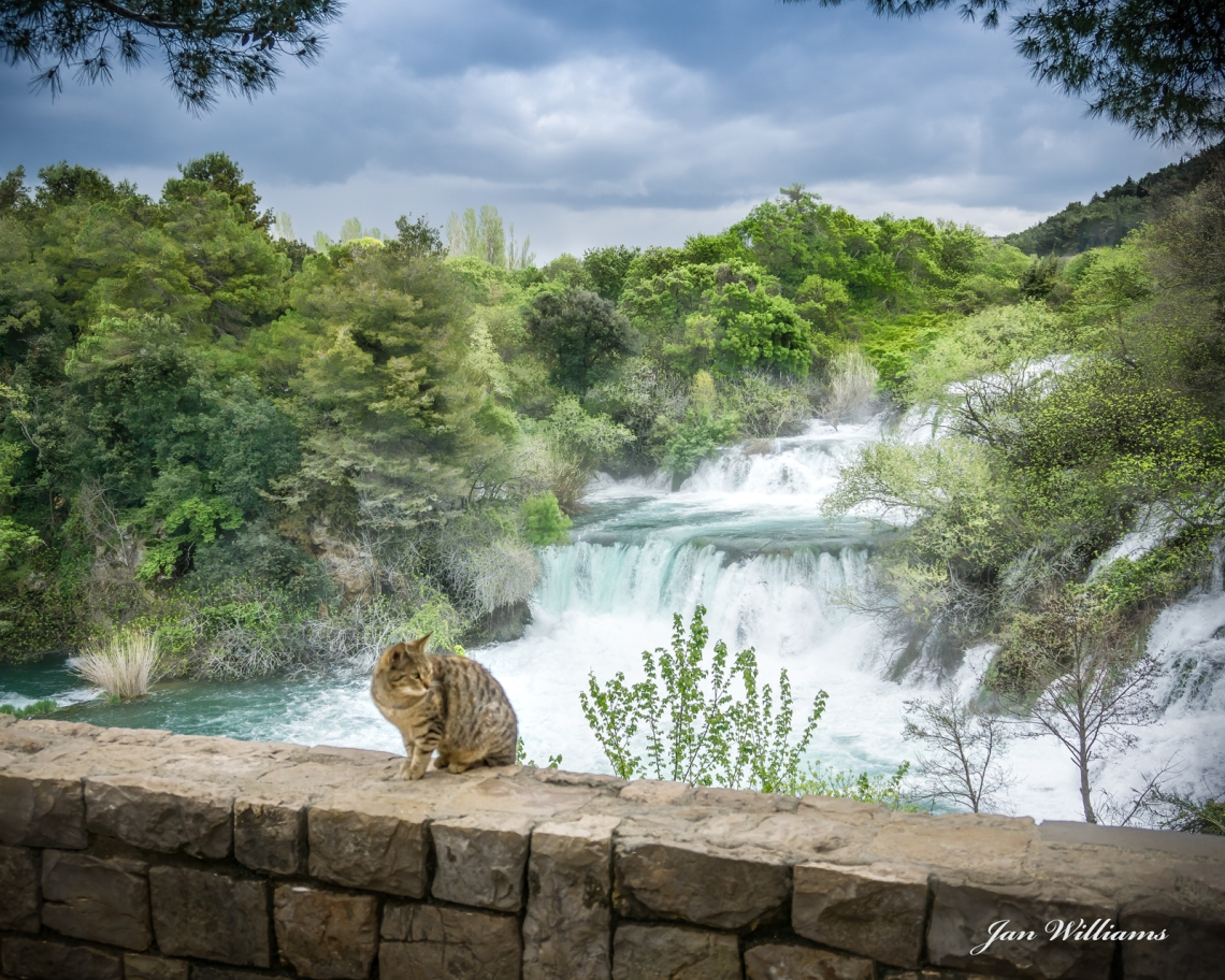 Cat at Krka Falls