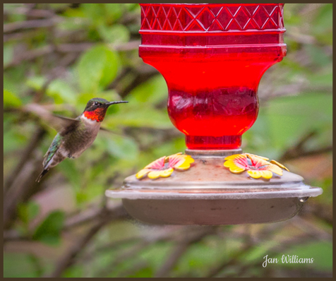 Visitor at the Feeder