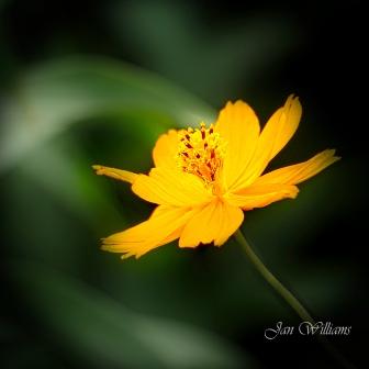 Botanic Gardens-1