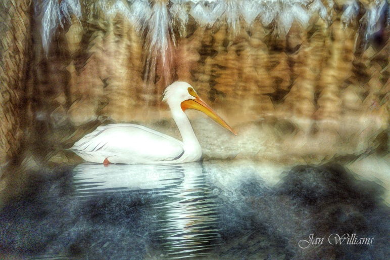 White Pelican Waterfall-1