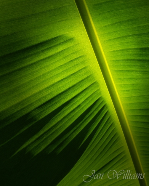 Palm Leaf-wp