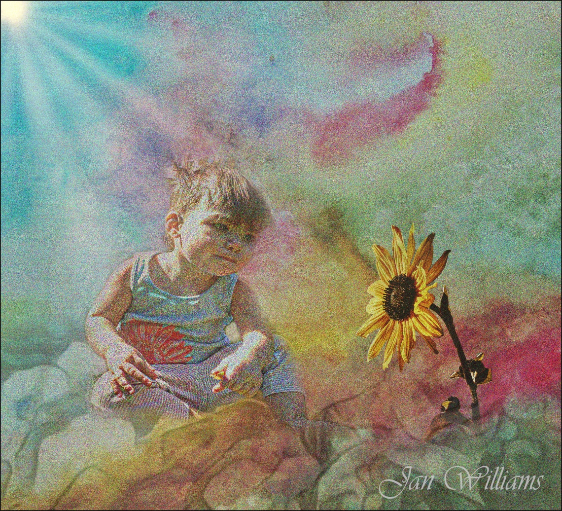Sunflower-Jan Williams-wp